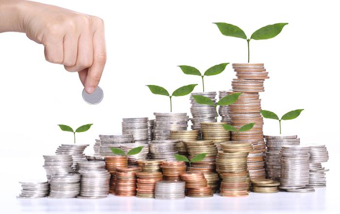 money-and-plant